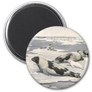 Vintage Harp Seals in Arctic Snow, Marine Animals 2 Inch Round Magnet