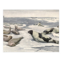 Vintage Harp Seals in Arctic Snow, Marine Animals Postcard
