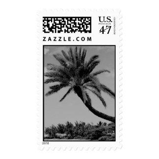 Vintage Hawaii Photo - Palm Trees Postage