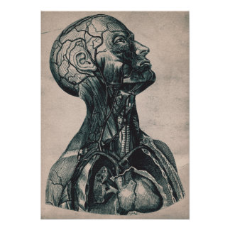 Vintage Head and Neck anatomy illustration poster