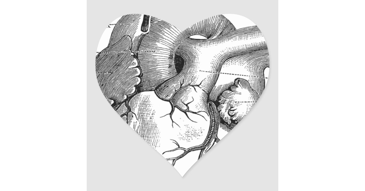 Vintage Heart Anatomy | Customizable Heart Sticker | Zazzle.com