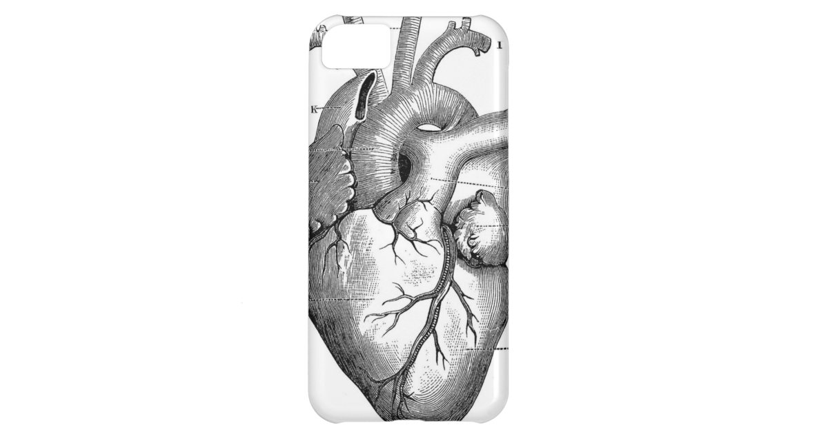 Exelent Vintage Heart Anatomy Ideas Human Anatomy Images