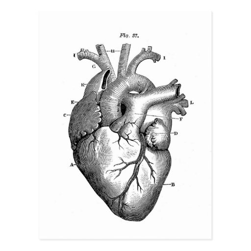Vintage Heart Anatomy | Customizable Post Cards
