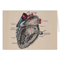 Vintage Heart Cardiovascular system anatomy Card
