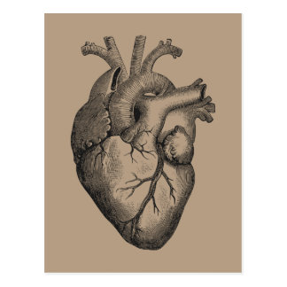 Vintage Heart Illustration Postcard