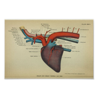 Vintage Heart of the Horse Anatomy Print