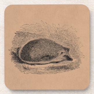 Vintage Hedgehog 1800s Hedgehogs Illustration Coaster