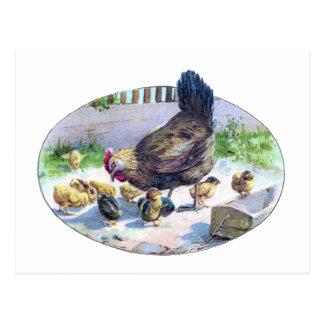 Vintage Hen and Chicks Postcard