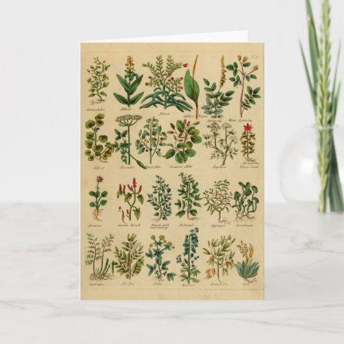 Vintage Herbal Greeting Card Series - 1