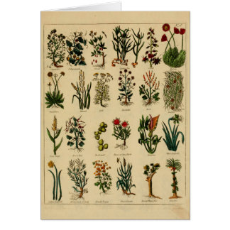 Vintage Herbal Greeting Card Series - 6