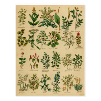 Vintage Herbal Postcard Series - 1