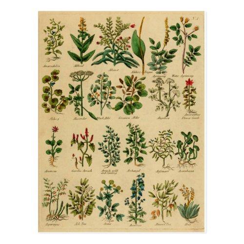 Vintage Herbal Postcard Series - 1