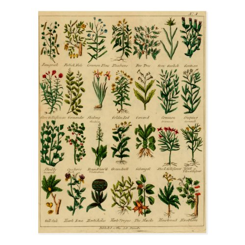 Vintage Herbal Postcard Series - 3