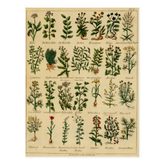 Vintage Herbal Postcard Series - 4