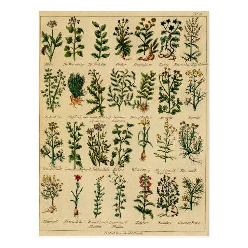 Vintage Herbal Postcard Series - 4
