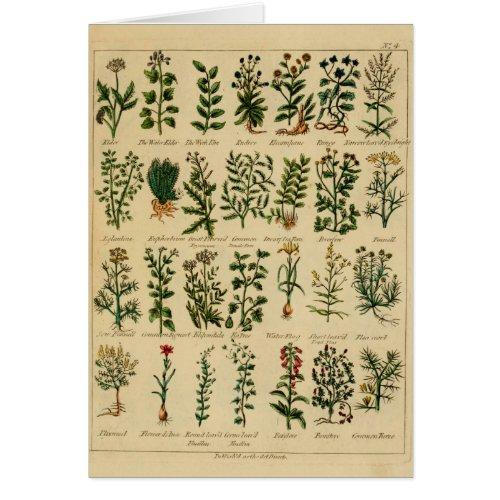 Vintage Herbal Greeting Card Series - 4