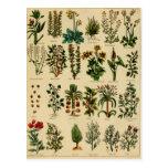 Vintage Herbal Postcard Series - 5