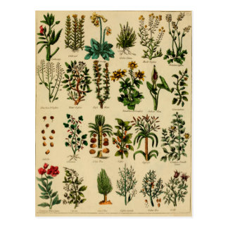 Vintage Herbal Postcard Series - 5