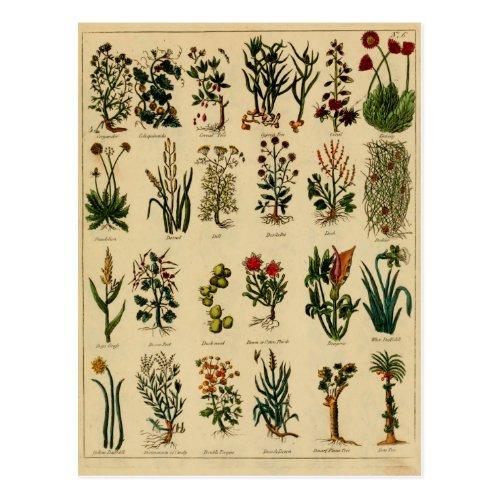 Vintage Herbal Postcard Series - 6