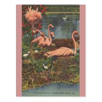 Vintage Hialeah Park Miami Flamingos Post Card