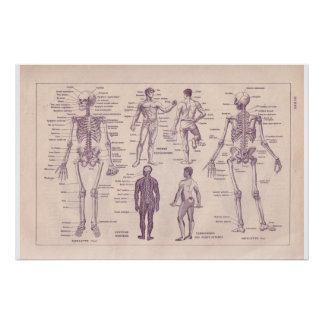 VIntage historic 1920  Human Body Poster