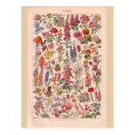 Vintage historic Flowers Postcards