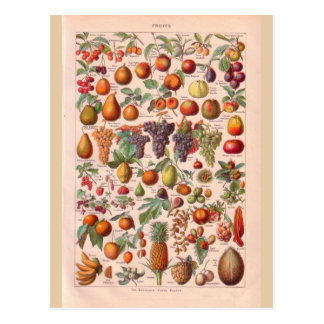 Vintage historic  fruit postcard