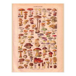 Vintage historic Mushrooms Post Cards