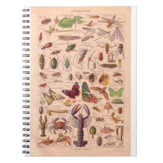 Vintage histórico, artrópodos libros de apuntes con espiral
