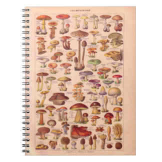 Vintage histórico, setas libro de apuntes