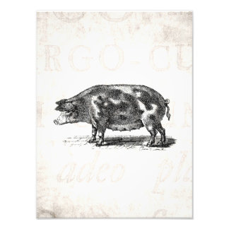 Vintage Hog Illustration on Old Paper 1800s Pig Art Photo