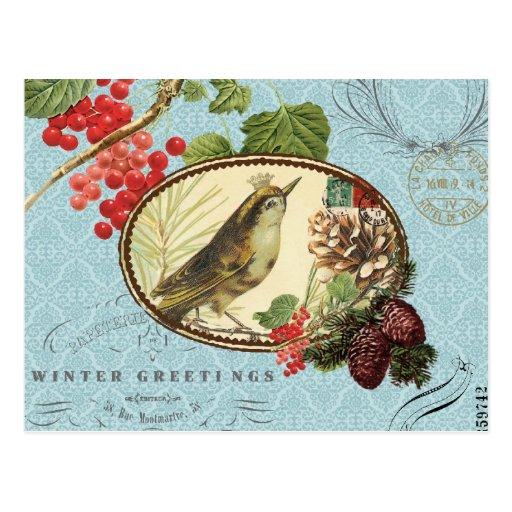 Vintage Holiday-Winter Bird-Postcard