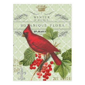 Vintage Holiday-Winter red cardinal-postcard