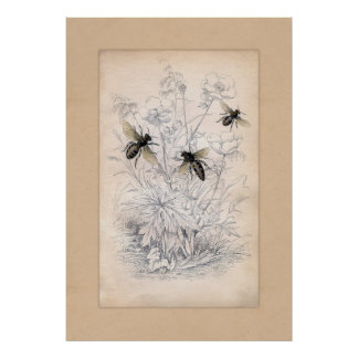 Vintage Honey Bee Art Print