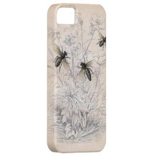 Vintage Honey Bee Art Print iPhone 5 Covers