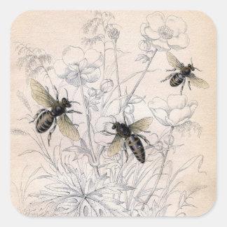 Vintage Honey Bee Art Print Square Sticker