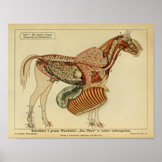 Vintage Horse Anatomy Advertisement Poster Zazzle