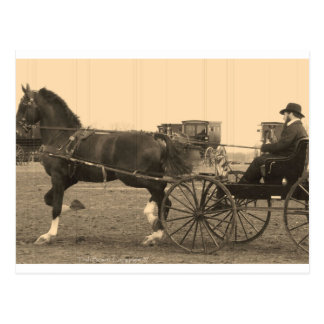 Vintage Horse and Carriage in Sepia Postcard