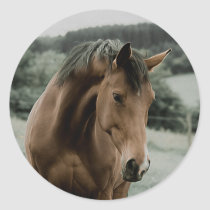 vintage horse animal painting art classic round sticker