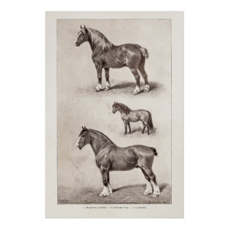 Vintage Horse Clydesdale Shetland Belgian Horses Poster