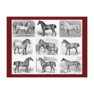 Vintage Horse Illustration Canvas Print (Brown)