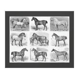 Vintage Horse Illustration Large Canvas Print