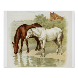 Vintage Horse Lovers Art Poster