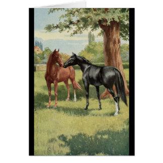 Vintage Horse Mare Stallion Equestrian Card
