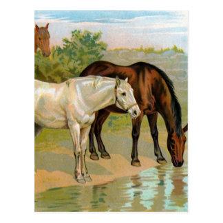 Vintage Horse Painting Postcard