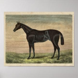 Vintage Horse Print 1873 Pretender