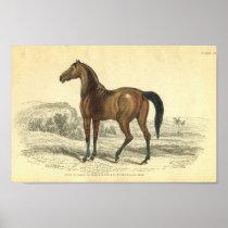 Vintage Horse Print Colt Of Brood Mare