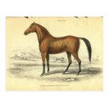Vintage Horse Print Jardine 1838 Filley Post Cards