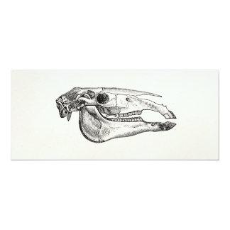 Vintage Horse Skull Skeleton Personalized Skeleton Card