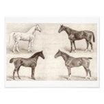 Vintage Horses - Horse and Pony Templates  horse Art Photo